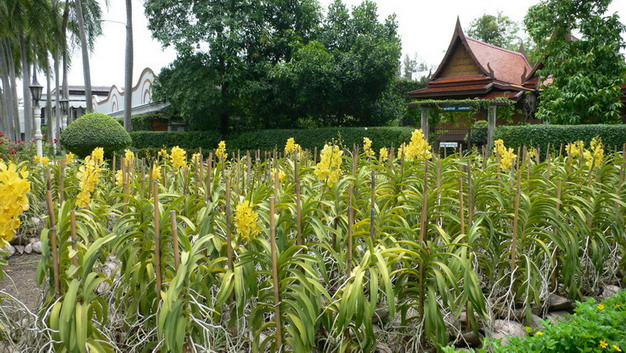 bangkok 0709 pic gallery 32