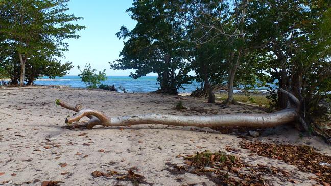 cuba 2012 playa larga I 0412 23