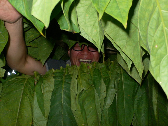 cuba 2011 vuelta abajo - trinidad 25